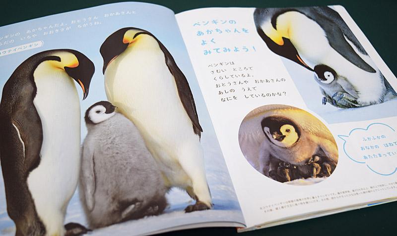 こどもちゃれんじほっぷえほん7月号ペンギンのおやこ