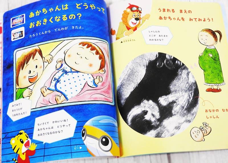 こどもちゃれんじすてっぷ1月号、赤ちゃんについての話のページ